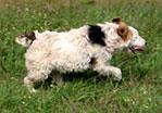 Ez egy majdnem két megás avi arról, hogy fut a kutya a gáton!! (bár nem érdemli meg, akinek felvettem.)